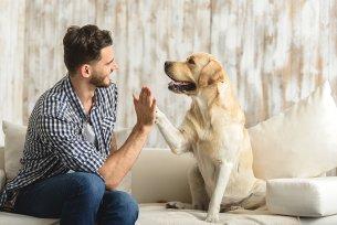 Melhor ração para cães com infecção urinária