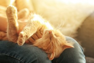 Melhor ra��o para c�lculo renal em gatos