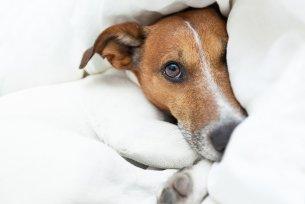 Melhor ração para doença renal em cães