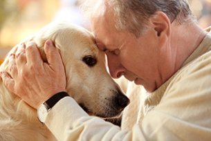 Melhor ração para problemas intestinais em cães