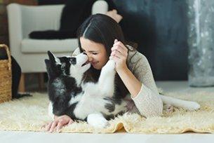 Melhor ração para gastrite em cães