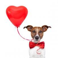 Doação de Sangue de Cães e Gatos