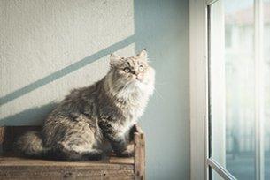 Melhor ra��o para gato castrado