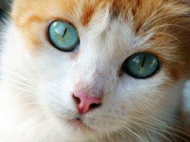 Melhor ração para constipação intestinal em gatos