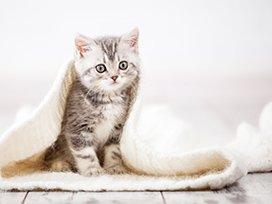 Ra��o Equil�brio � boa para gato filhote?