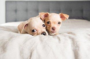 Cuidados com cachorro de ra�a pequena