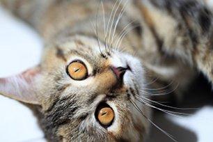 4 erros comuns na hora de escolher a melhor ra��o para gato