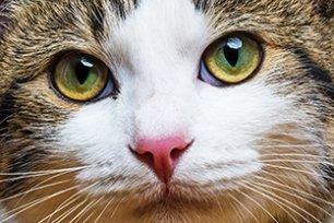 Melhor ração super premium para gato castrado