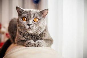 Ração super premium para gato castrado