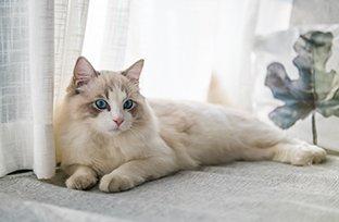 Doenças de pele em gato