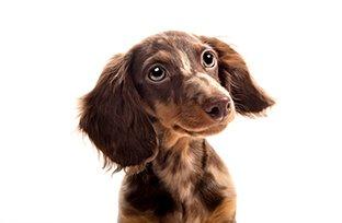 Vacinas para cachorro: quais são e quando dar