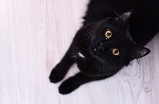 Quantidade de ração para gato: cuidados para não errar na porção