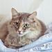 Castração de gato previne câncer