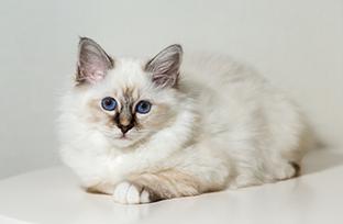 Acne felina: o que � e como identificar