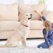 Displasia canina: sintomas e tratamento