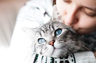 Doenças de pele em gatos causadas por fungos