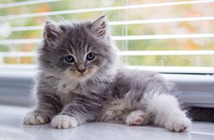 Gato rec�m-nascido com diarreia: como cuidar?