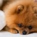 Parvovirose canina: causas, sintomas e tratamento
