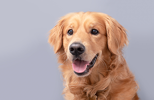 Cinofilia: como saber qual a raça do cachorro?