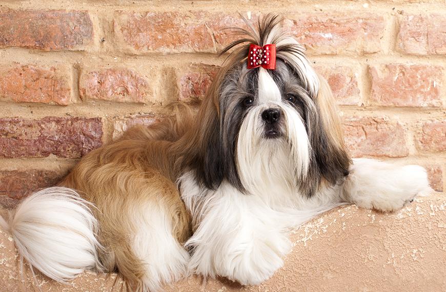 Coprofagia canina: o que fazer quando o cachorro come fezes?