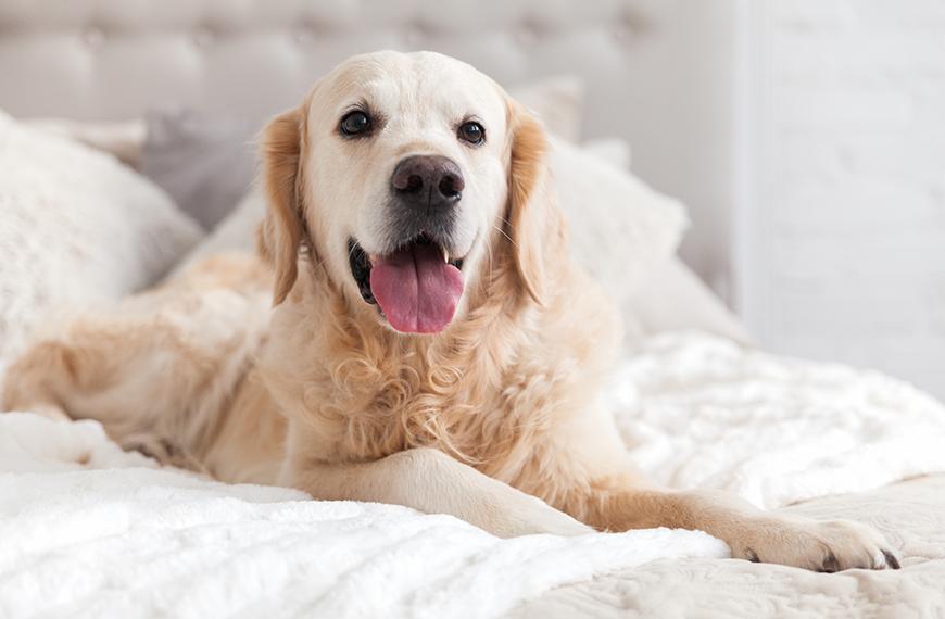 Mau h�lito de cachorro: causas e tratamento
