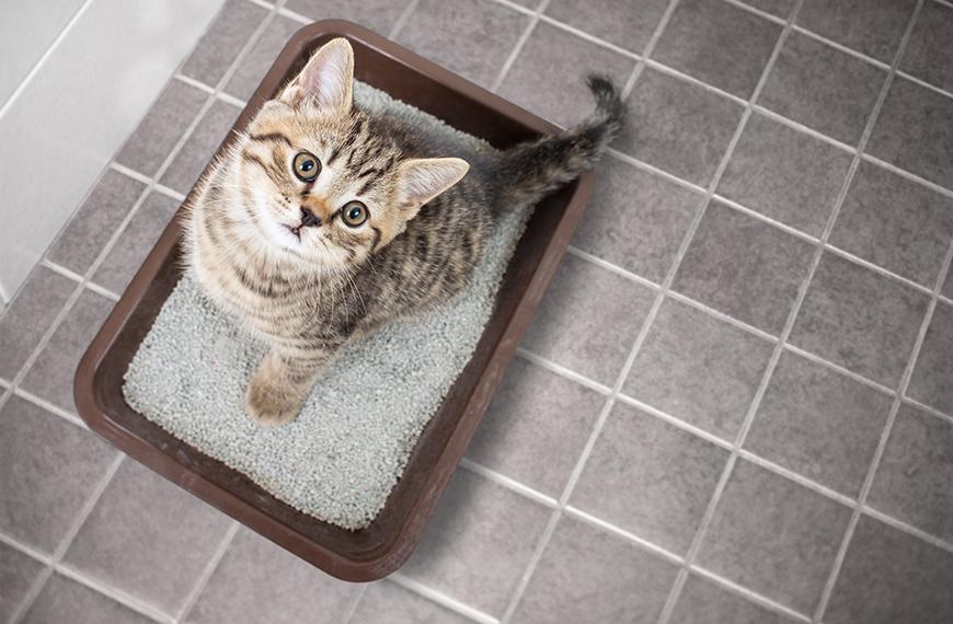 Caixa de areia para gatos: quais cuidados devo ter?