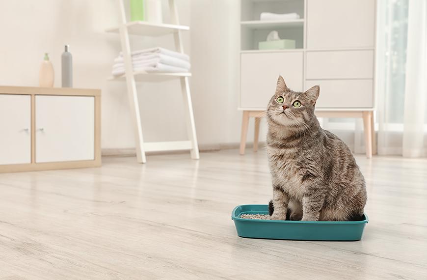 Caixa de areia para gatos: como fazer a higieniza��o correta?