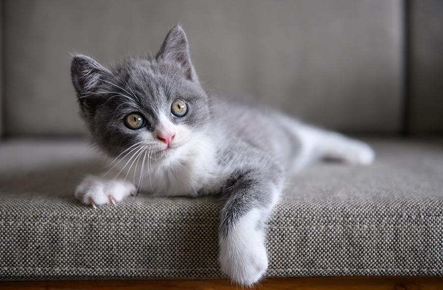 Verme em gato filhote: como cuidar?