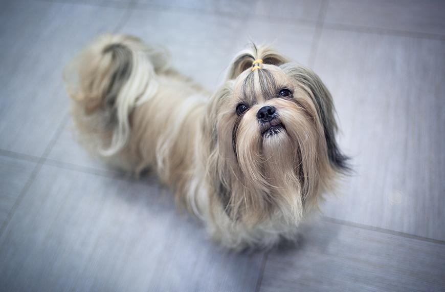 Coprofagia: como fazer o cachorro n�o comer fezes?