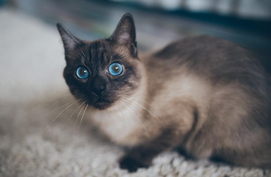 Mau h�lito em gatos: pode ser t�rtaro