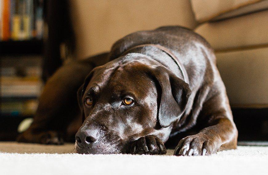 Cachorro tem depress�o?