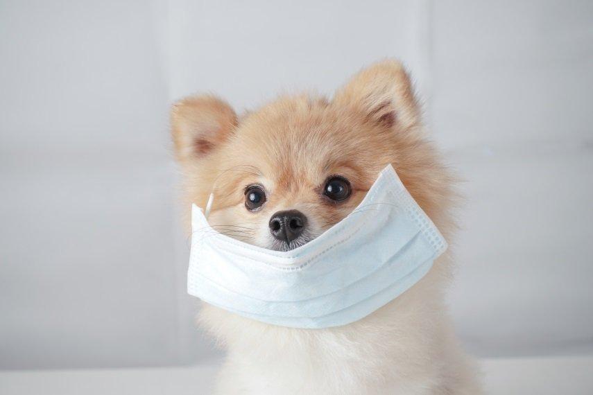 Especial Coronavírus: afinal, pets transmitem COVID-19 para humanos?