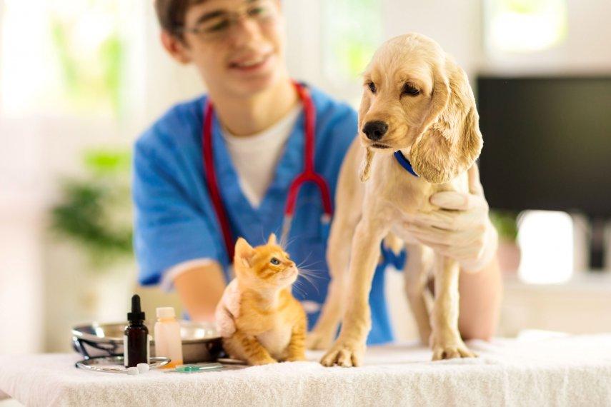 Vacina��o de c�es e gatos. Saiba tudo para mant�-los protegidos
