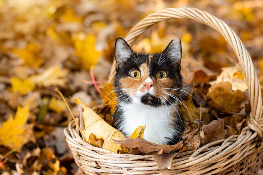 Cuidados no outono