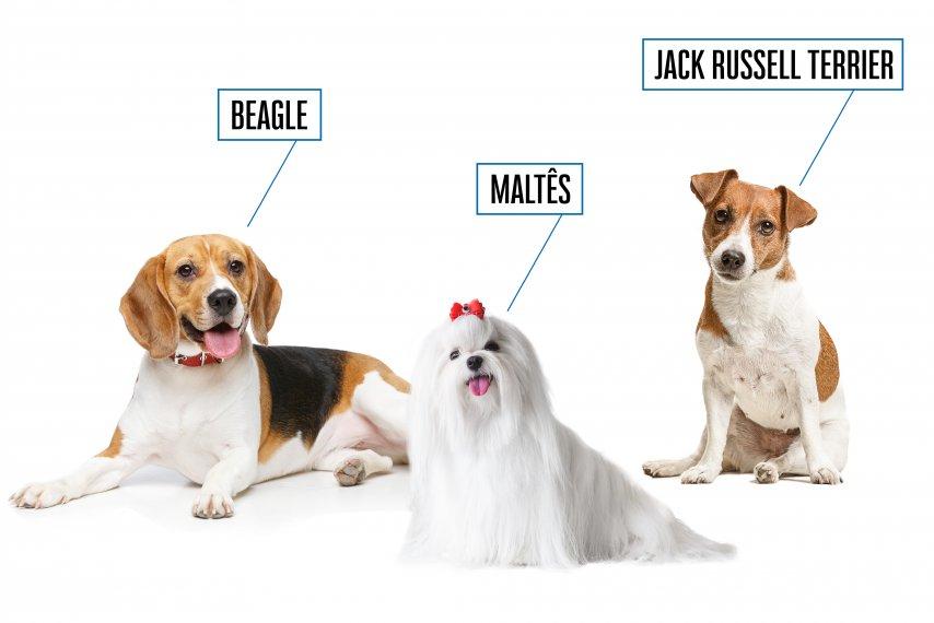 Raças incríveis de cães