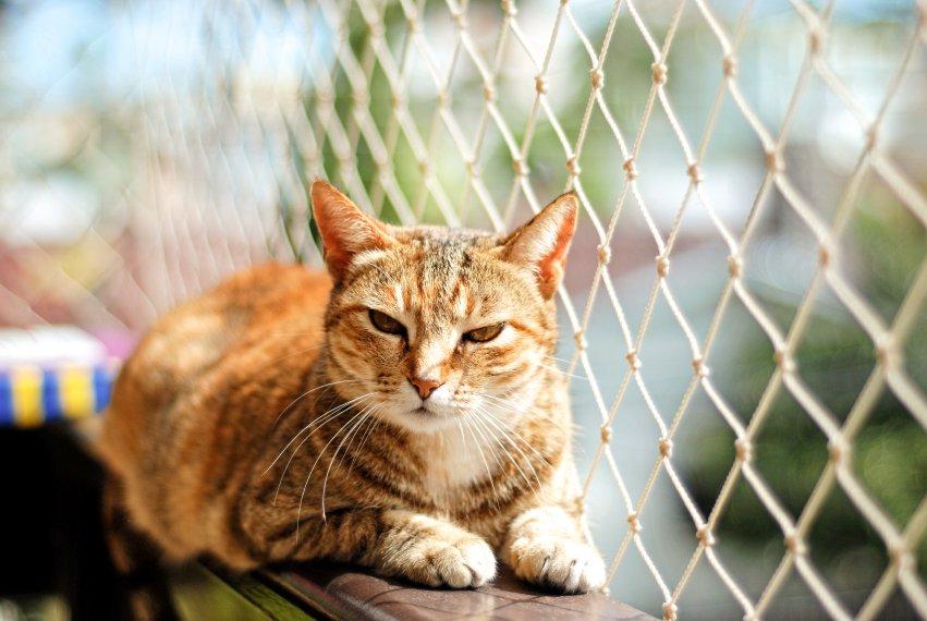 Tela de prote��o � importante para a seguran�a do seu gatinho