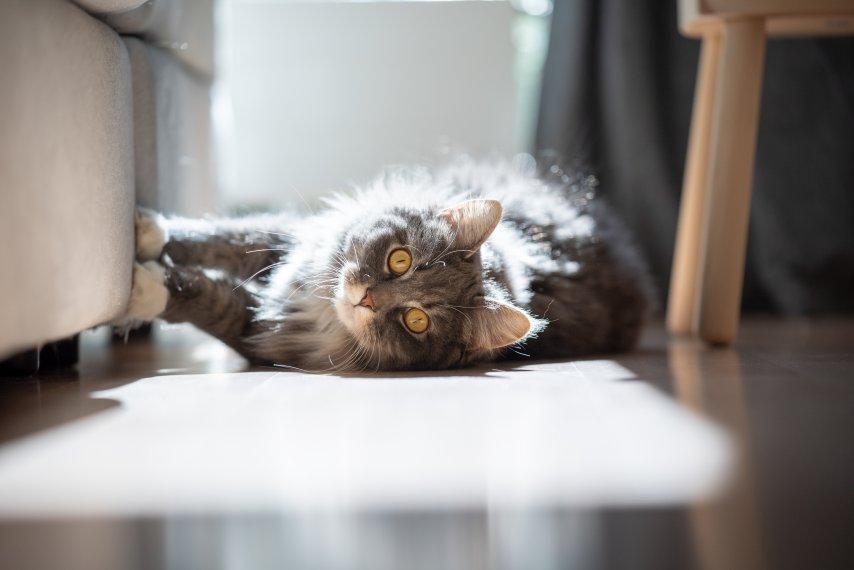 Arranhador de sofa indicado para gatos