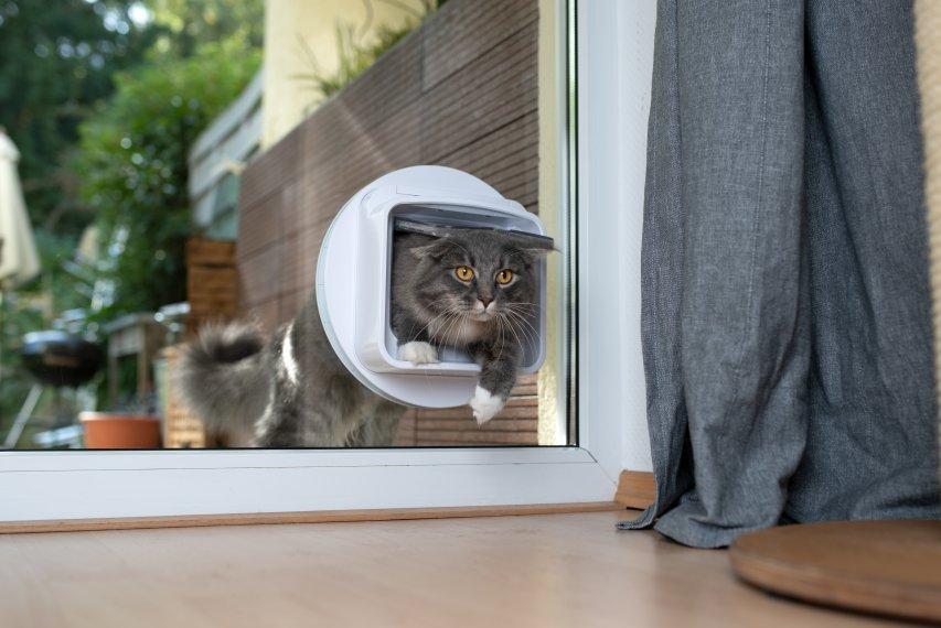 Por que gatos conseguem entrar em qualquer lugar