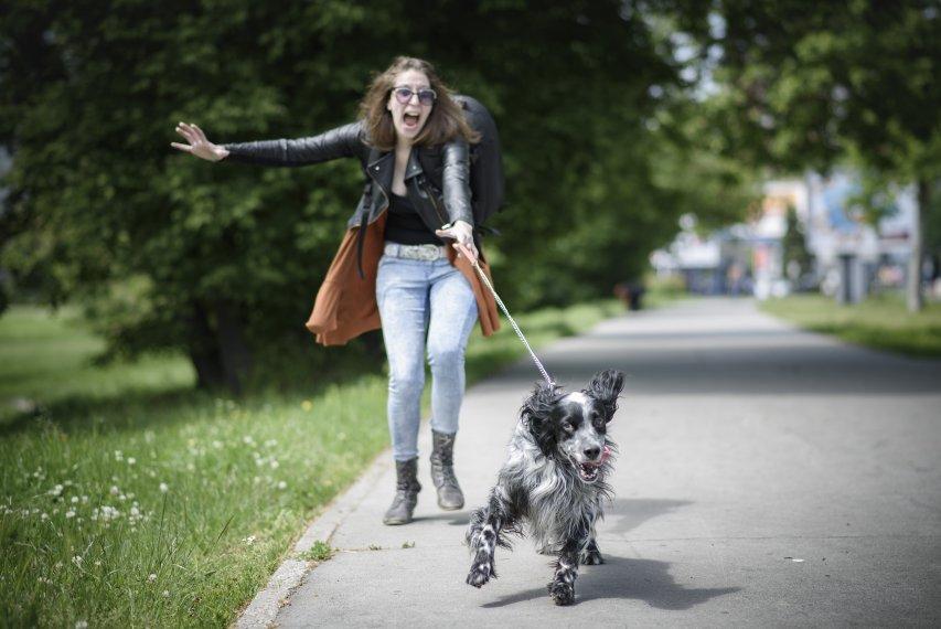 Seu cachorro sai puxando durante o passeio Veja o que fazer