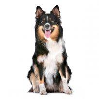 Doenças renais - como identificar e melhorar a qualidade de vida do seu animal